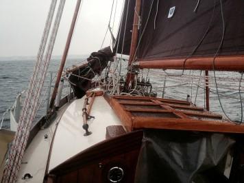 Hoppetosse auf der grauen Ostsee