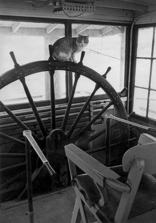Eine dicke Katze sitzt auf einem Steuerrad