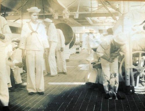 """Eine Katze bekommt einen Trick beigebracht an Bord des Kreuzers """"Olympia"""", um 1898"""