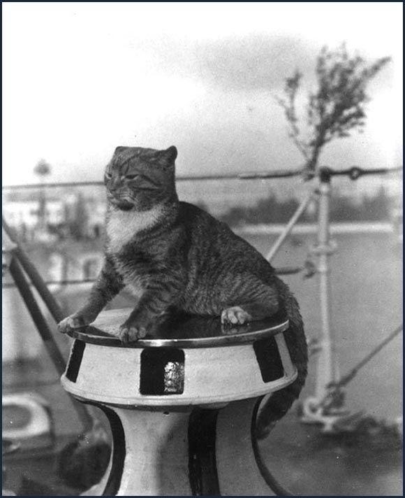 """Die Schiffskatze der USS Flusser """"Wockle"""" auf dem Ankerspiel, Venedig, Italien, um 1924"""
