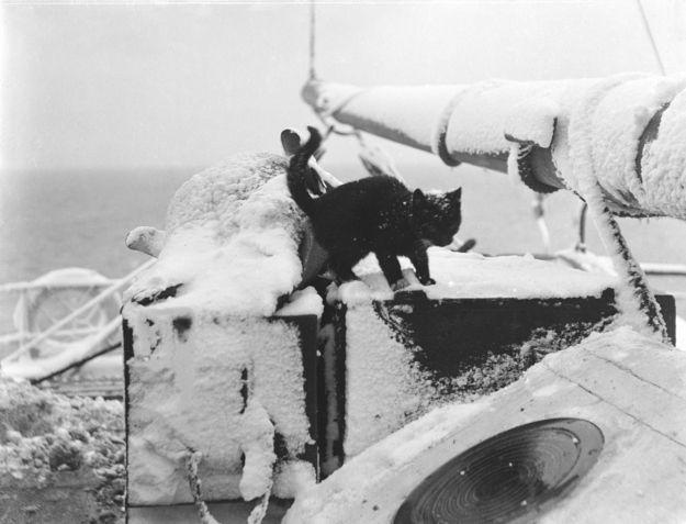 katzen auf schiffen13